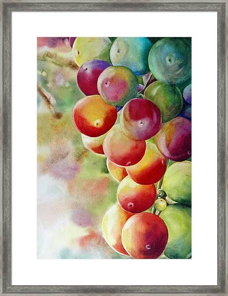 Golden Grapes Framed Print