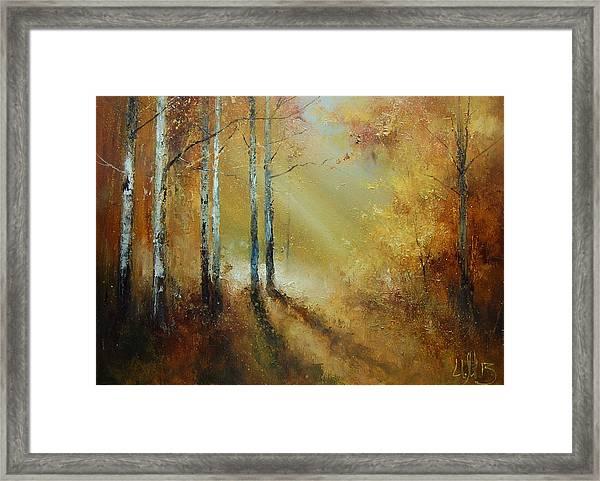 Golden Light In Autumn Woods Framed Print