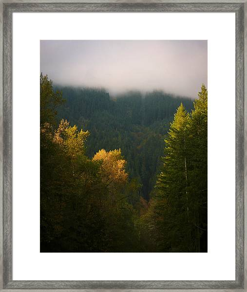 Framed Print featuring the photograph Golden Light by Priya Ghose