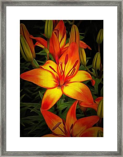Golden Lilies Framed Print