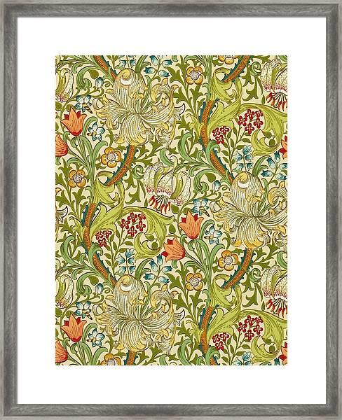 Golden Lily Framed Print