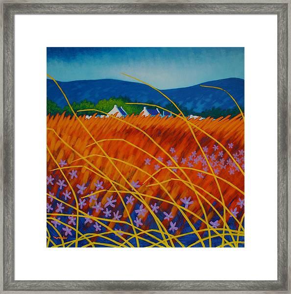 Golden Meadow Framed Print