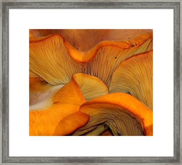 Golden Mushroom Abstract Framed Print