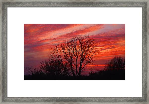 Golden Pink Sunset With Trees Framed Print