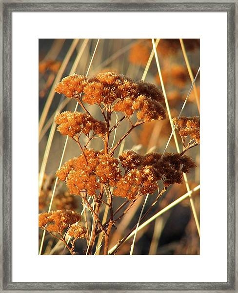 Golden Reach Framed Print