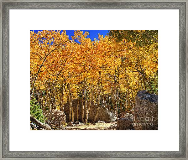 Golden Season 2 Framed Print
