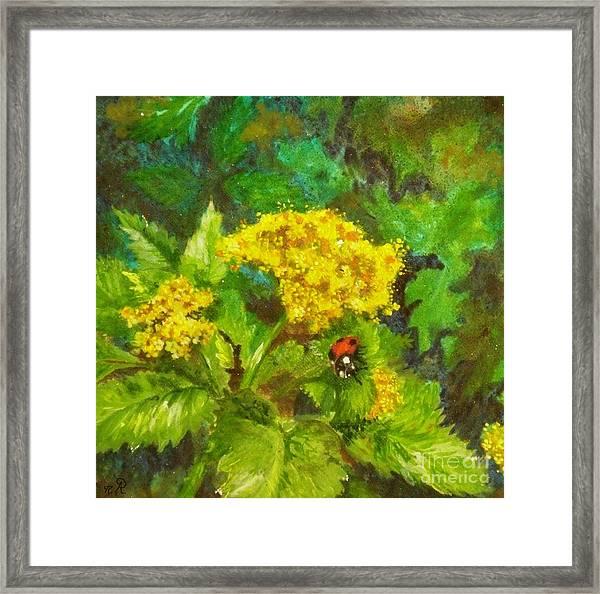 Golden Summer Blooms Framed Print