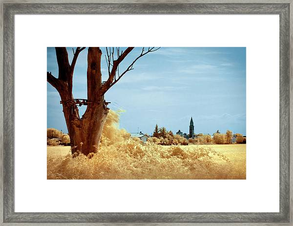 Golden Summer Framed Print