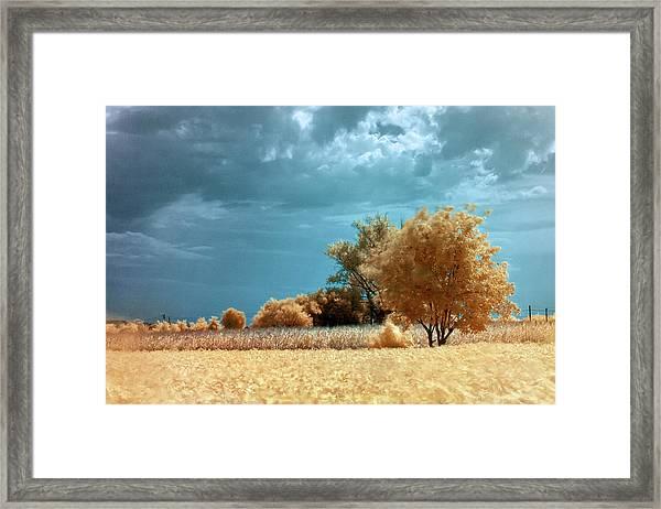 Golden Summerscape Framed Print