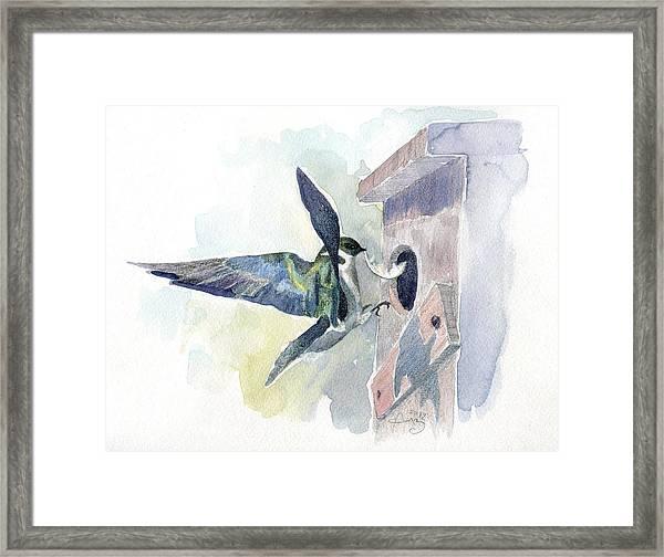 Golden Swallow Framed Print