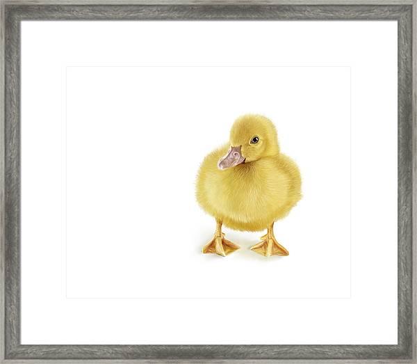 Golden Treasure Framed Print by Bob Nolin