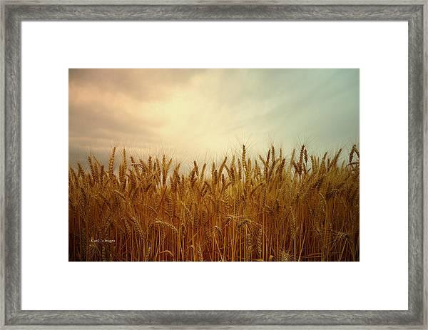 Golden Wheat Framed Print