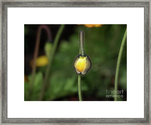 Goldengatefloral01 Framed Print