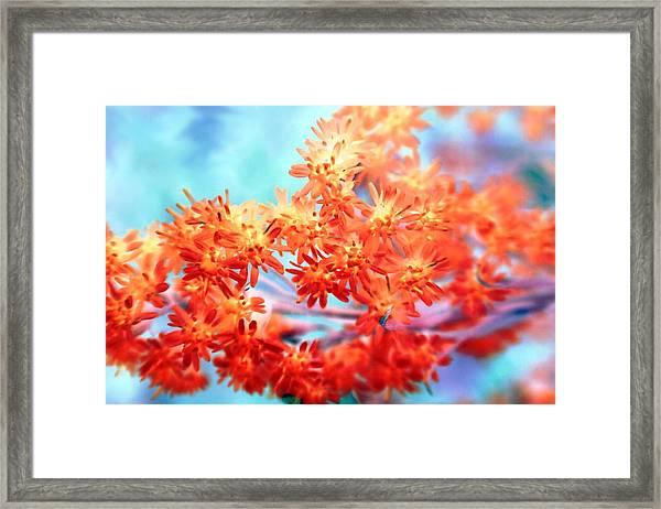 Goldenrod 37 Framed Print