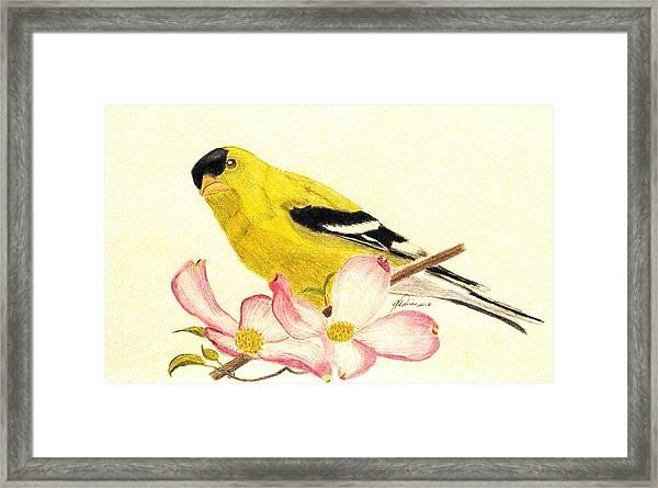 Goldfinch Spring Framed Print