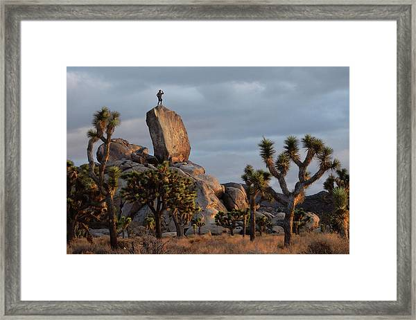 Goldie Dawn Framed Print