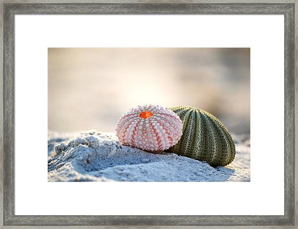 Gone Shelling Framed Print