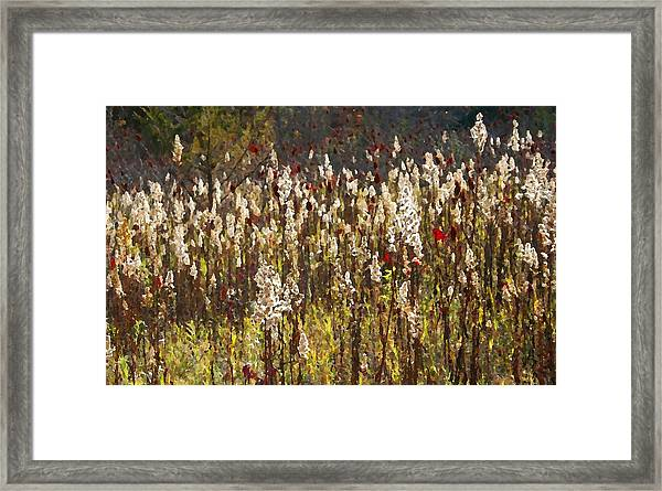 Gone To Seed Framed Print