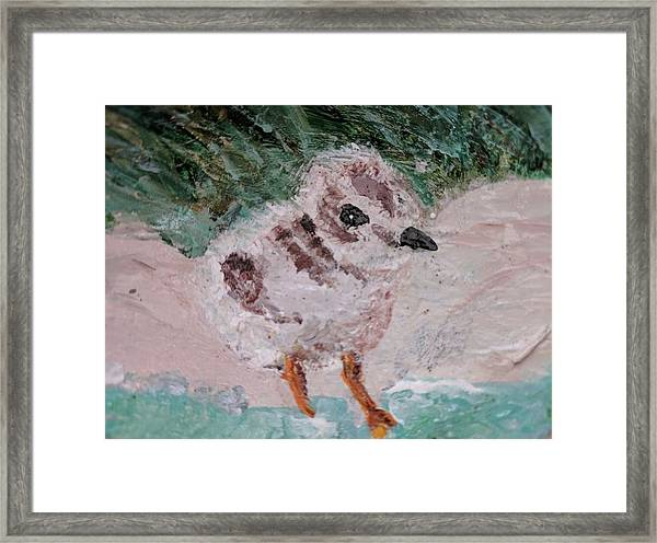 Good Harbor Piping Plover Chick #1 Framed Print