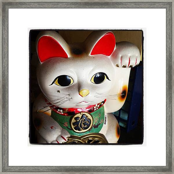 Framed Print featuring the photograph Good Meowning. #myfab5 by Mr Photojimsf