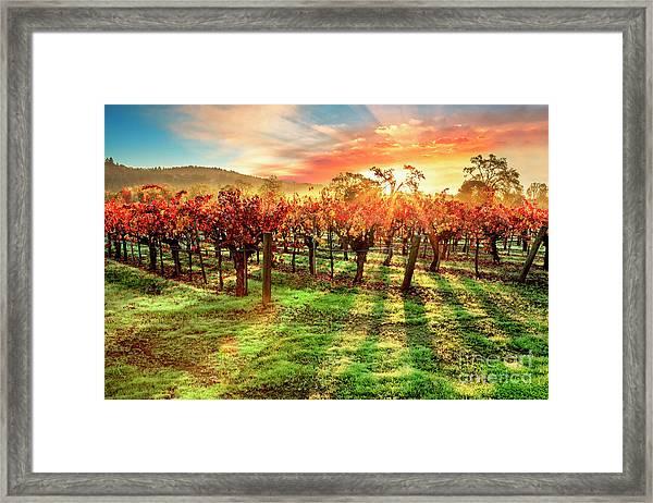 Good Morning Napa Framed Print