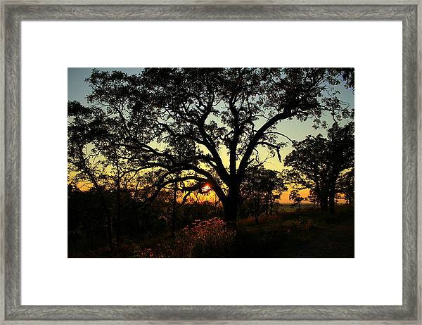 Good Night Tree Framed Print