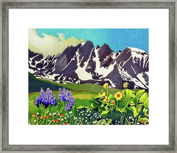 Gore Range Wildflowers Framed Print