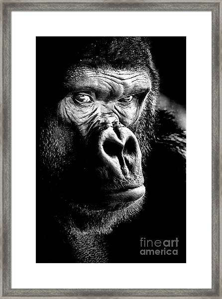 Gorilla Canvas Print, Photographic Print, Art Print, Framed Print, Greeting Card, Iphone Case, Framed Print