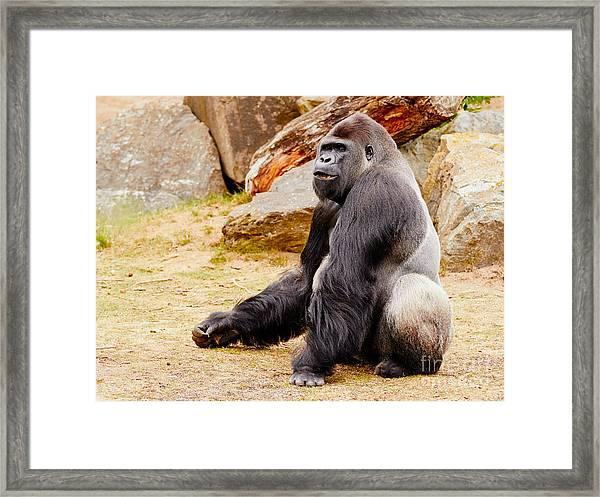 Gorilla Sitting Upright Framed Print