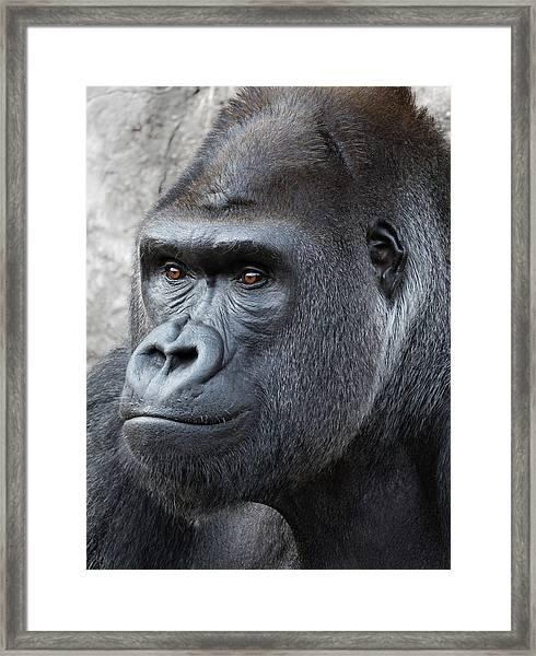 Gorillas In The Mist Framed Print