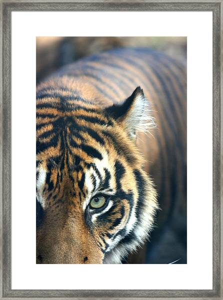 Got My Eye On You Framed Print