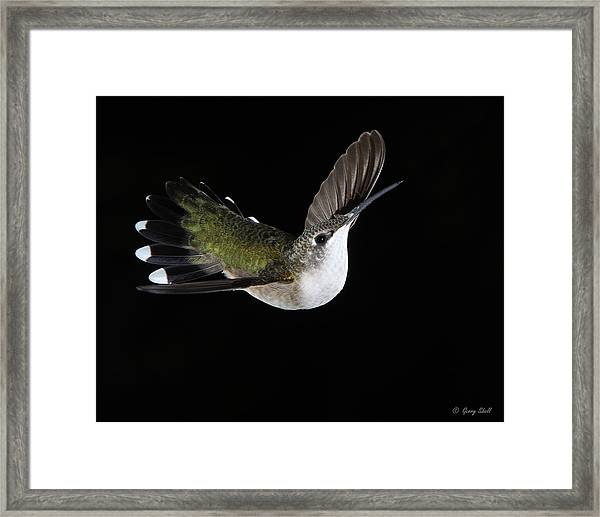 Graceful Framed Print