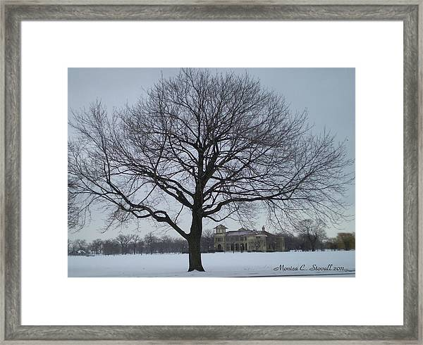 Graceful Tree And Belle Isle Eating Casino In Distance Framed Print