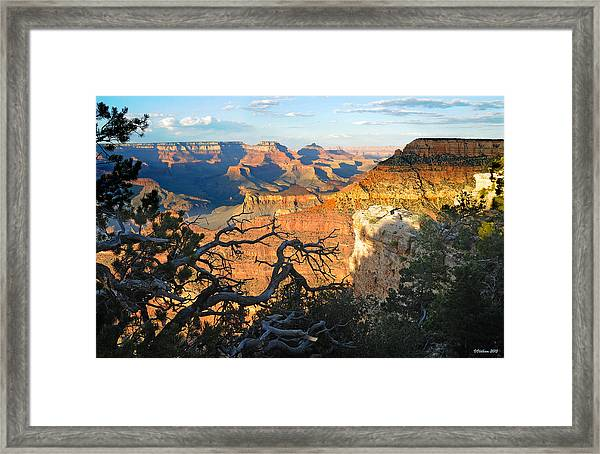 Grand Canyon South Rim - Sunset Through Trees Framed Print