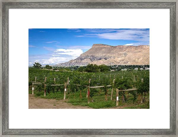 Grand Valley Vineyards Framed Print