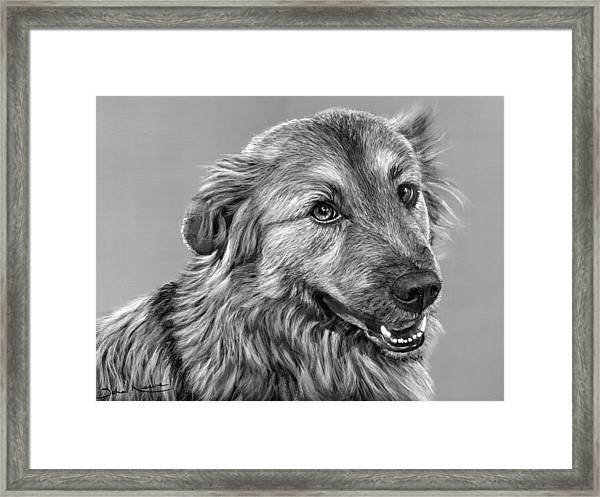 Granddog Kuper Framed Print