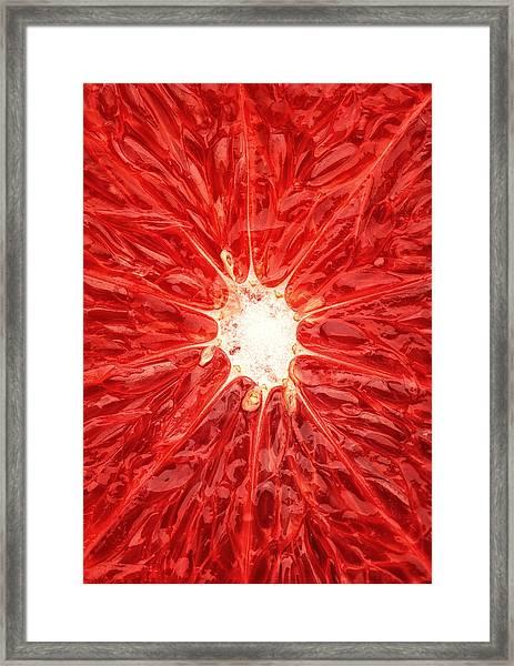 Grapefruit Close-up Framed Print