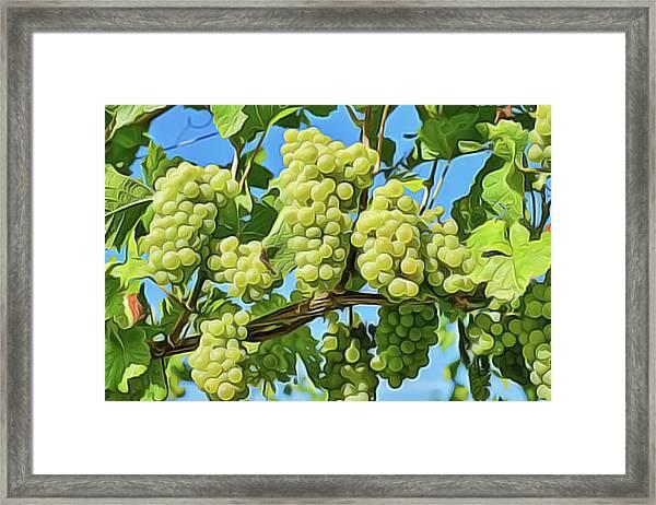 Grapes Not Wrath Framed Print