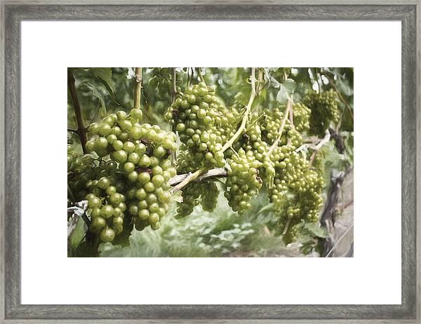 Grapes Framed Print by Zev Steinhardt