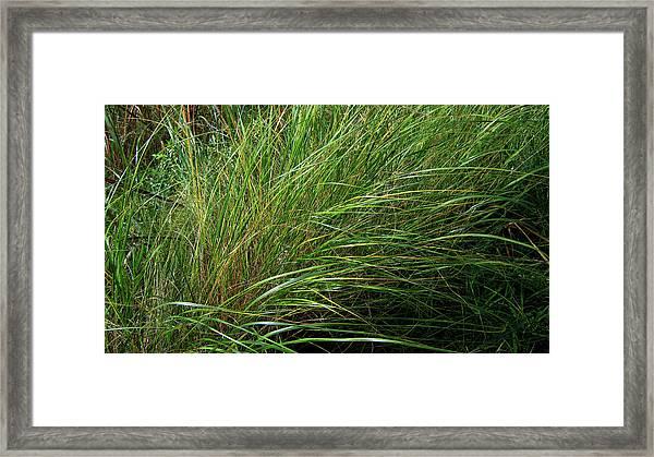 Grass Framed Print