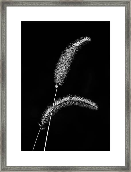 Grass In Black And White Framed Print