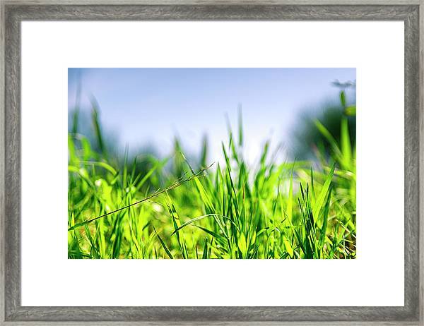 Framed Print featuring the photograph Grass by Nikos Stavrakas