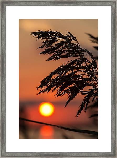 Grass Silhouette Framed Print