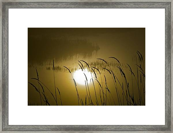 Grass Silhouettes Framed Print