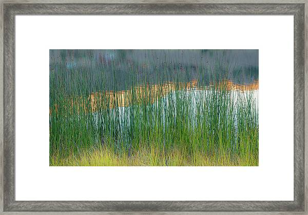 Grasses And Reflections Framed Print