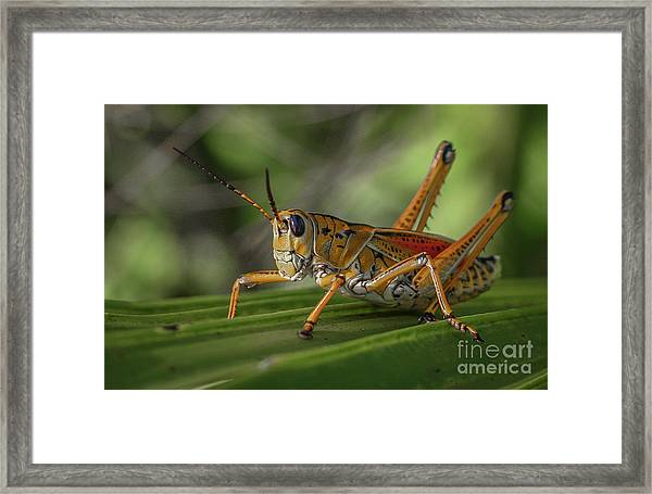 Framed Print featuring the photograph Grasshopper And Palm Frond by Tom Claud