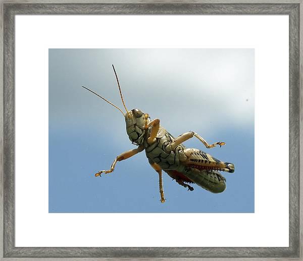 Grasshopper I Framed Print