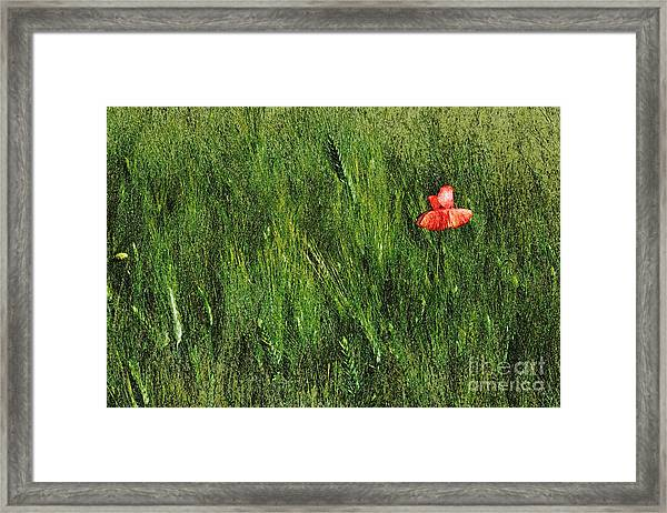 Grassland And Red Poppy Flower 2 Framed Print