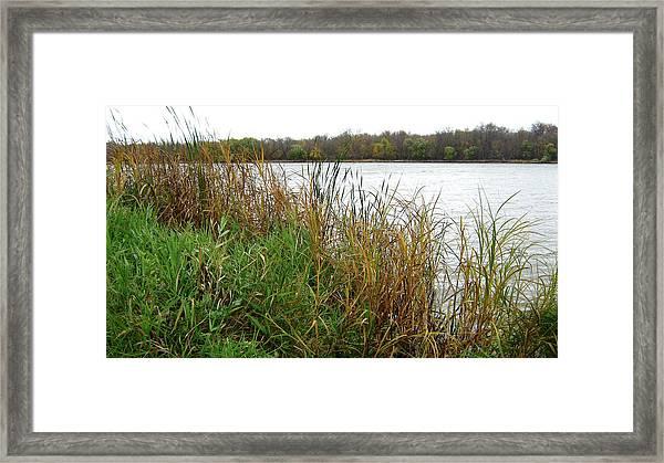 Grassy Bank Framed Print