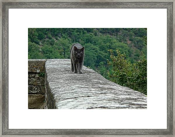 Gray Cat Prowling Framed Print